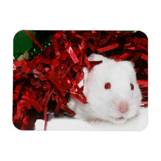 Navidad blanco del hámster imán rectangular