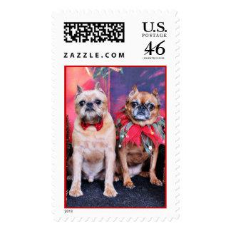 Navidad - Bruselas Griffon - Marv y Marge