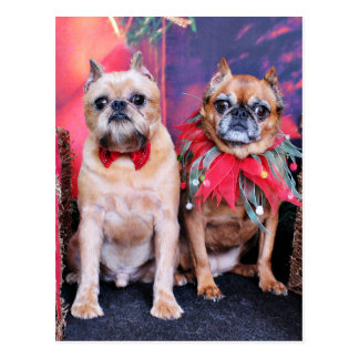 Navidad - Bruselas Griffon - Marv y Marge Tarjeta Postal