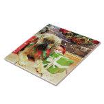 Navidad - Bruselas Griffon - Oliverio Azulejo