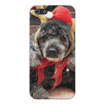 Navidad - caniche - PAL iPhone 5 Cárcasas