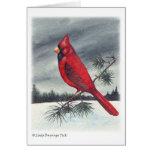 Navidad cardinal del pájaro tarjetas