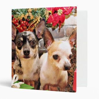 Navidad - chihuahua - Gordy y Pedro