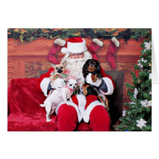 Navidad - chihuahuas y caballeros tarjeta de felicitación