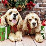 Navidad - cocker spaniel - pecas y Mollie Escultura Fotografica