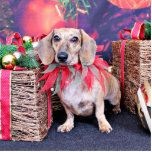 Navidad - Dachshund - Chloe Escultura Fotografica