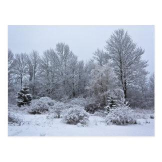 Navidad de blanco puro de Windsor Tarjetas Postales
