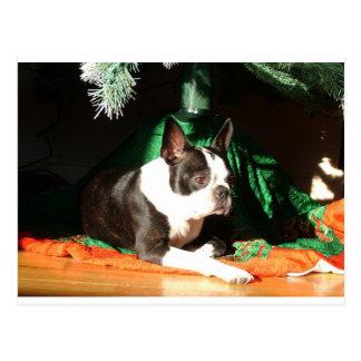 Navidad de Boston Terrier con el gaitero Postal