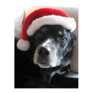 Navidad de la mezcla de Santa Perro-Labrador Postal