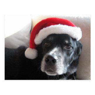 Navidad de la mezcla de Santa Perro-Labrador Postales