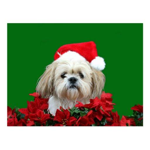 Navidad de Shih Tzu Tarjeta Postal