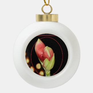Navidad del Amaryllis