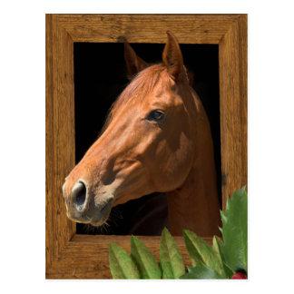 Navidad del caballo tarjeta postal