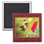 Navidad del colibrí del gorra de Santa Imán Para Frigorífico
