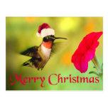 Navidad del colibrí del gorra de Santa Tarjetas Postales