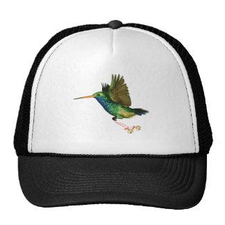 Navidad del colibrí gorra