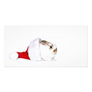 Navidad del conejito tarjetas fotograficas