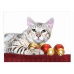 Navidad del gato de Bengala Tarjeta Postal