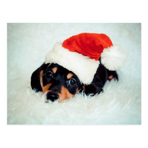 Navidad del perrito del Dachshund Tarjetas Postales