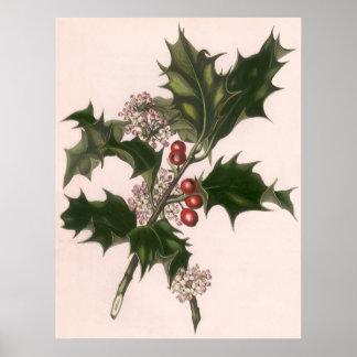 Navidad del vintage, planta del acebo con las póster