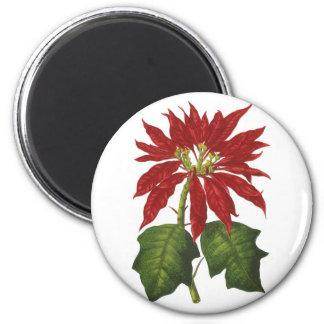 Navidad del vintage, Poinsettia rojo Imán Para Frigorifico