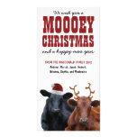 Navidad divertido de Mooey de los pares de la vaca Tarjeta Con Foto Personalizada