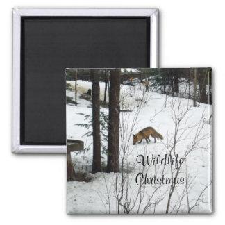 Navidad-Fox de la fauna Imán Cuadrado