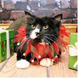 Navidad - gato - Óscar Escultura Fotografica