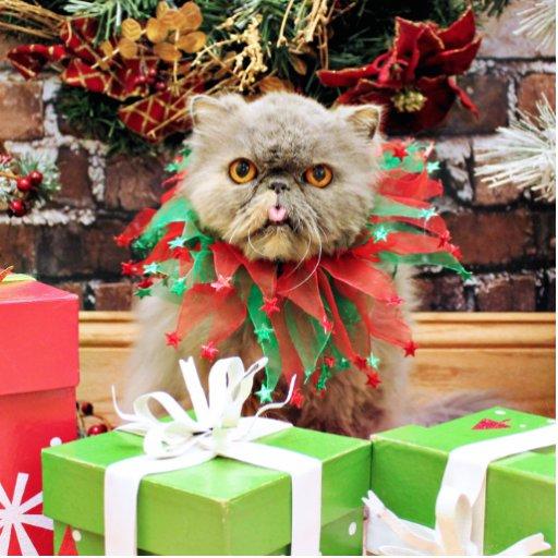 Navidad - gato persa - Frannie Esculturas Fotográficas