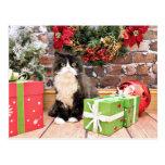 Navidad - gato - persa - George Postal