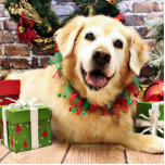 Navidad - golden retriever - Abby Esculturas Fotográficas