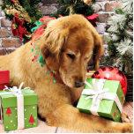 Navidad - golden retriever - Addison Esculturas Fotograficas