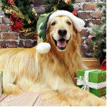 Navidad - golden retriever - Conor Escultura Fotografica