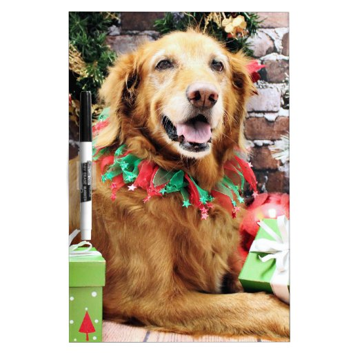 Navidad - golden retriever - Lexie Pizarras