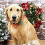 Navidad - golden retriever - Wriggley Esculturas Fotográficas