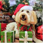 Navidad - GoldenDoodle - Bella Escultura Fotografica