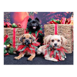 Navidad - Gus de Puggle - Shorkie Charlie - Pom Postal