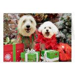 Navidad - Havanese - Steve - Terrier X - Edie Tarjeton
