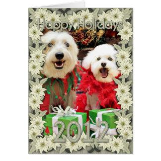 Navidad - Havanese Steve - Terrier X Edie
