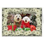 Navidad - Havanese Steve - Terrier X Edie Felicitaciones