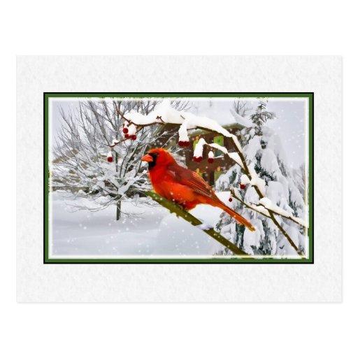 Navidad, invierno, pájaro cardinal, nieve, postal