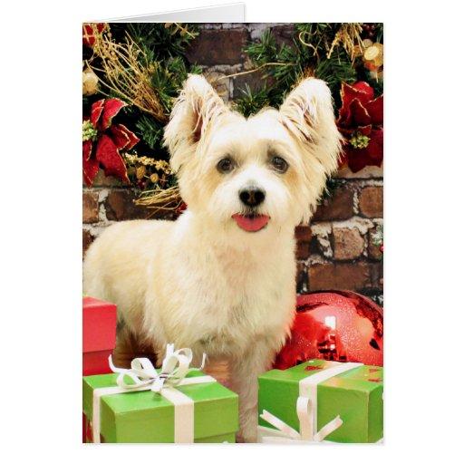 Navidad - Jack Russell Westie X - señora Tarjeta De Felicitación
