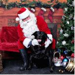 Navidad - Labrador - Gidget Escultura Fotográfica