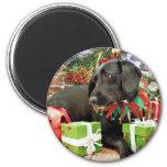 Navidad - Labrador X de oro - Abby Imán