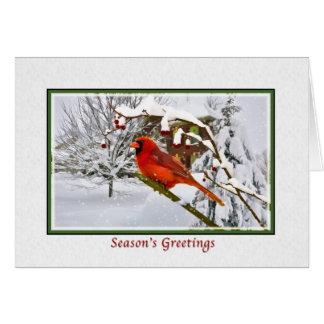 Navidad los saludos de la estación pájaro cardin