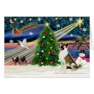 Navidad Magia-Akita brwn-blanco Tarjetón