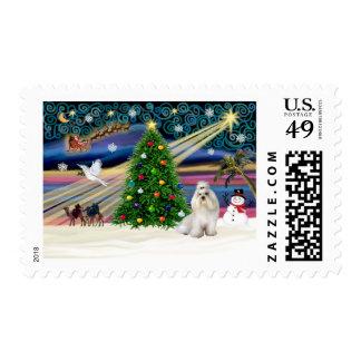 Navidad Magia-Havanese-blanca Sello