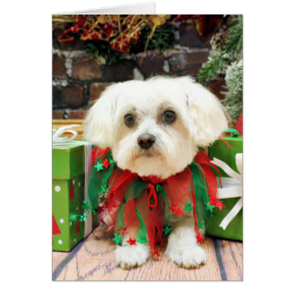 Navidad - maltés - Annie