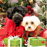 Navidad - maltés - Annie y YorkiePoo - Hannah Escultura Fotográfica