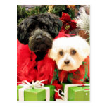 Navidad - maltés - Annie y YorkiePoo - Hannah Postal